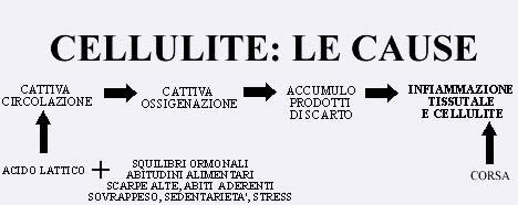 CELLULITE LE CAU5SE