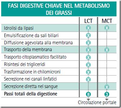 metabolismo dei grassi.png